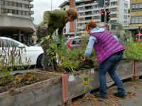 Bepflanzung_11_2015_28