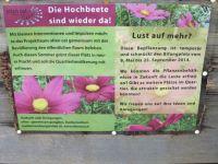 Projekt_Wunderkiste_Vorplatzbepflanzung_20